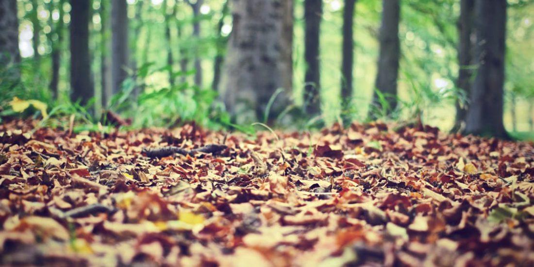 Happy Autumn everyone!